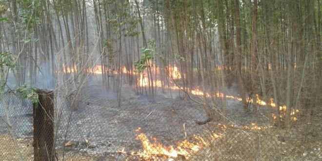 Incêndio destrói plantação de eucalipto e pastos
