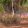 Vídeo de fogo que atingiu a área rural de Dourado