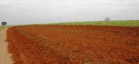 Prefeitura inicia preparação em terreno que receberá Casas Populares