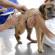 Prefeitura de Ribeirão Bonito realiza vacinação anti-rábica