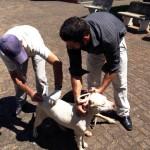 Dourado realiza campanha de vacinação para cães e gatos (Foto: Divulgação)