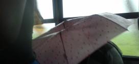 Pessoas precisam abrir guarda chuva dentro do ônibus circular