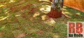 Prefeitura de Dourado realiza plantio de grama em pontos da cidade