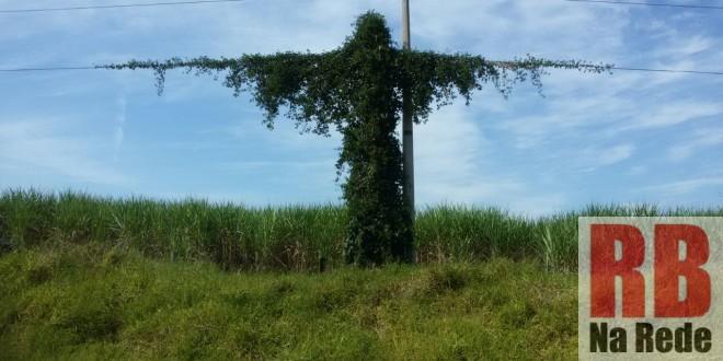 Cipó e cabos elétricos recriam imagem de Cristo Crucificado em Ribeirão Bonito