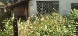 Mato supera muro de casa em Ribeirão Bonito