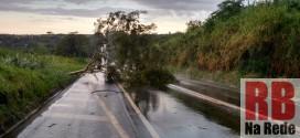 Árvore cai e interdita parte da SP-215 em Ribeirão Bonito