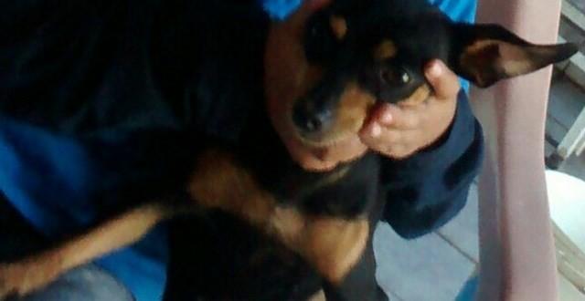 Cachorra está desaparecida em Ribeirão Bonito