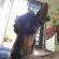 Cachorro está desaparecido no Jardim Morumbi